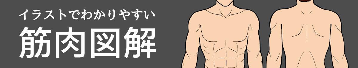 イラストで分かりやすい筋肉図解