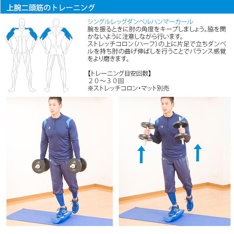 ラバーダンベルセットNR50kg トレーニング例 上腕二頭筋